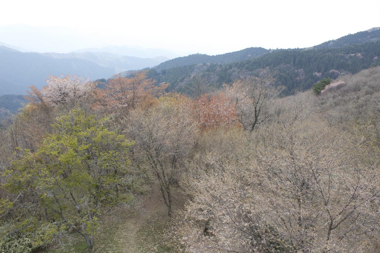 金剛山16