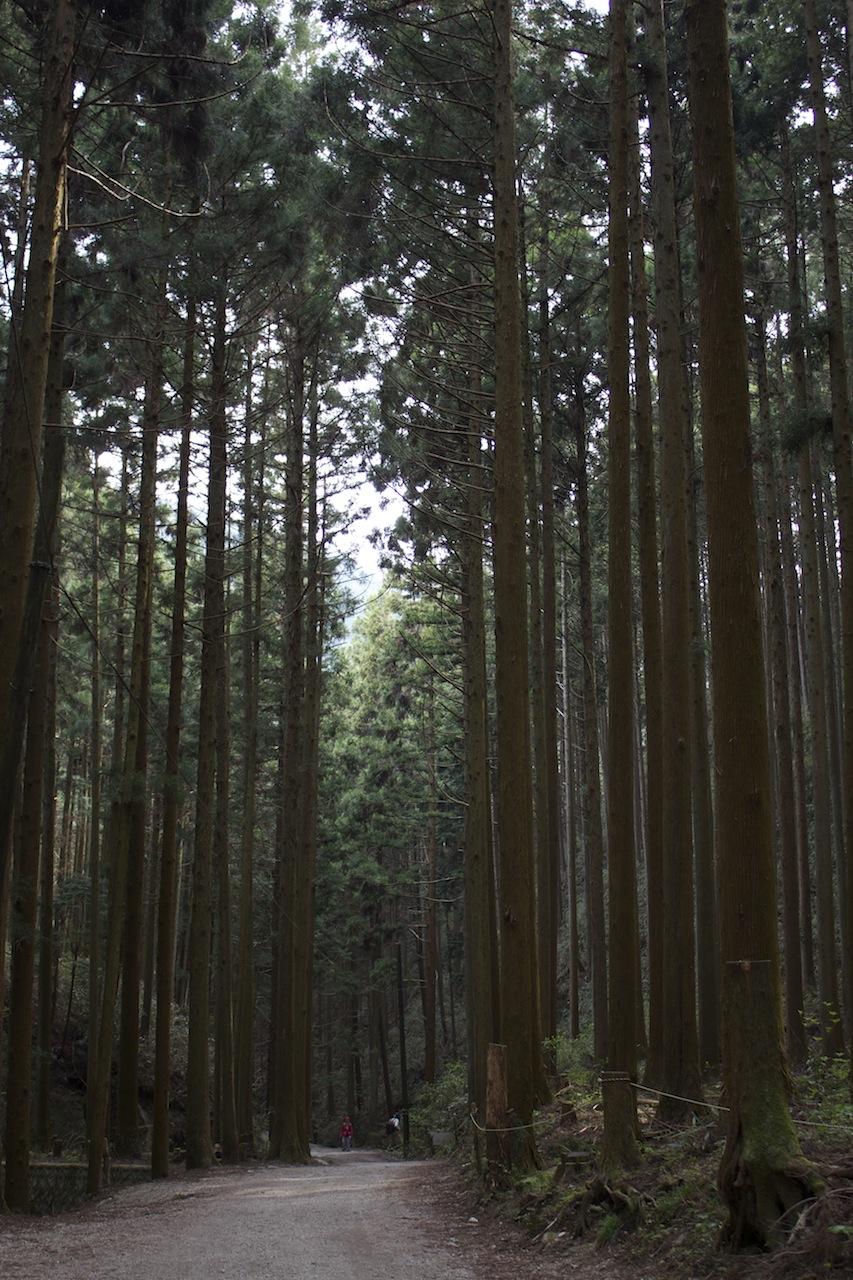 金剛山17